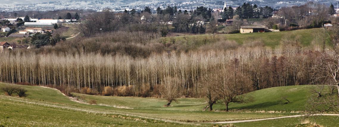 http://neuroptyk.com/files/gimgs/42_sparterie---arnaud-thomas---paysage-david-besson-2.jpg